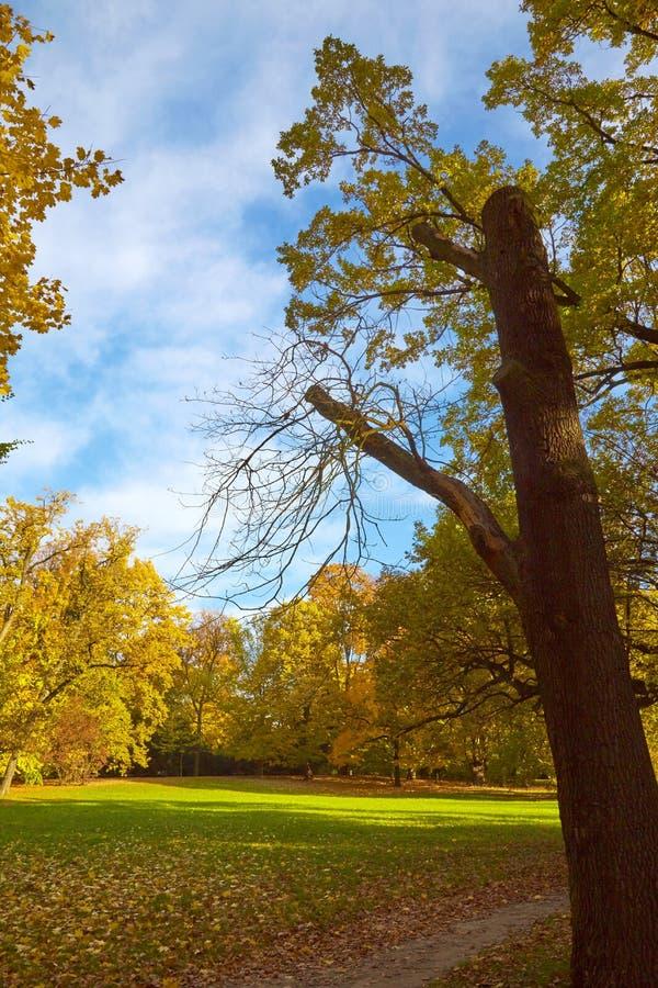 Mighty tree stock photography