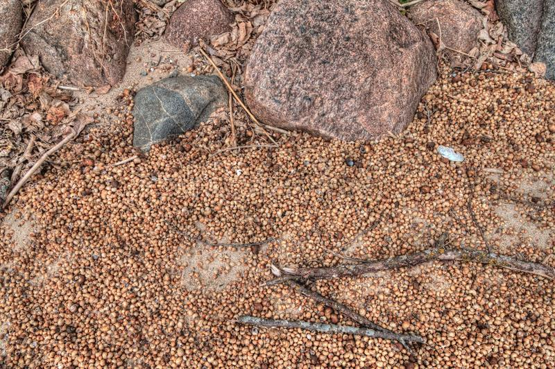 Migliaia di coperture della lumaca sono prova del Fauce dilagante immagini stock libere da diritti