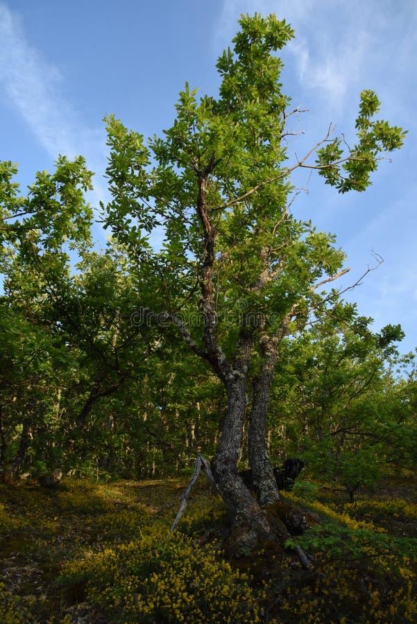 Migliore albero fotografia stock libera da diritti