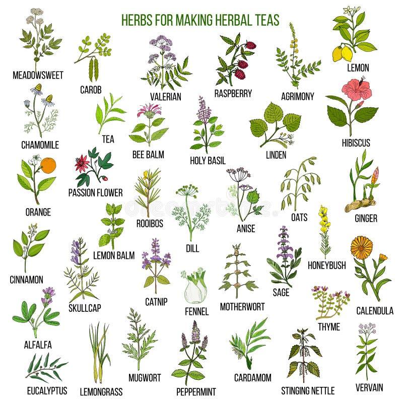 Migliori erbe per i tè illustrazione di stock