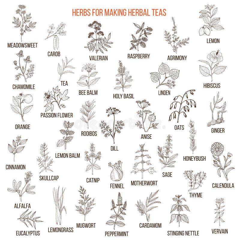 Migliori erbe per i tè illustrazione vettoriale