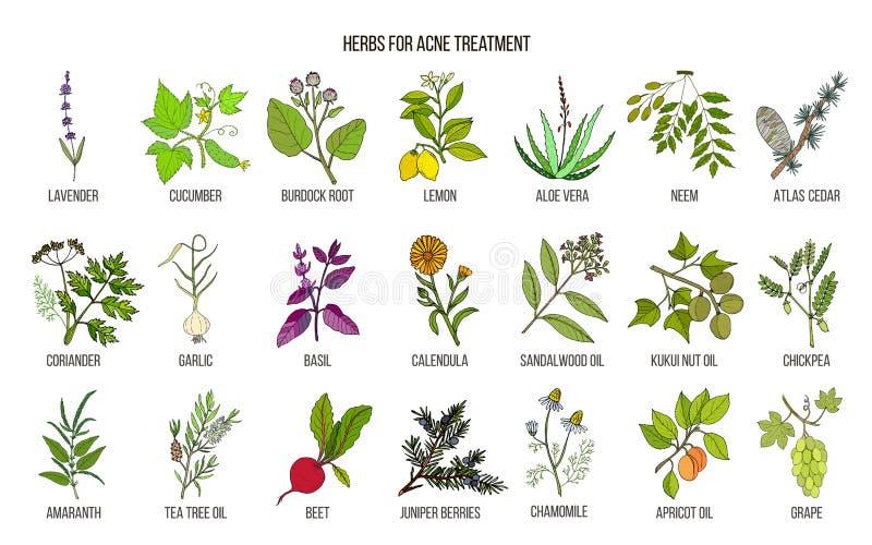 Migliori erbe per il trattamento dell'acne royalty illustrazione gratis