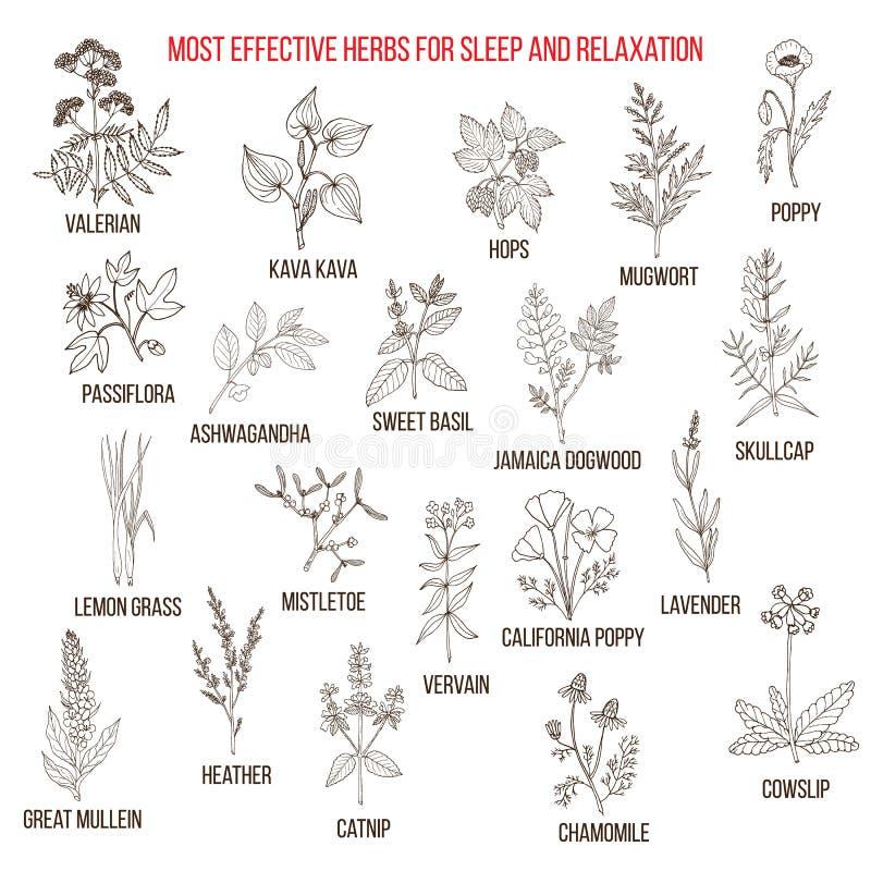 Migliori rimedi di erbe a sonno ed a rilassamento illustrazione vettoriale