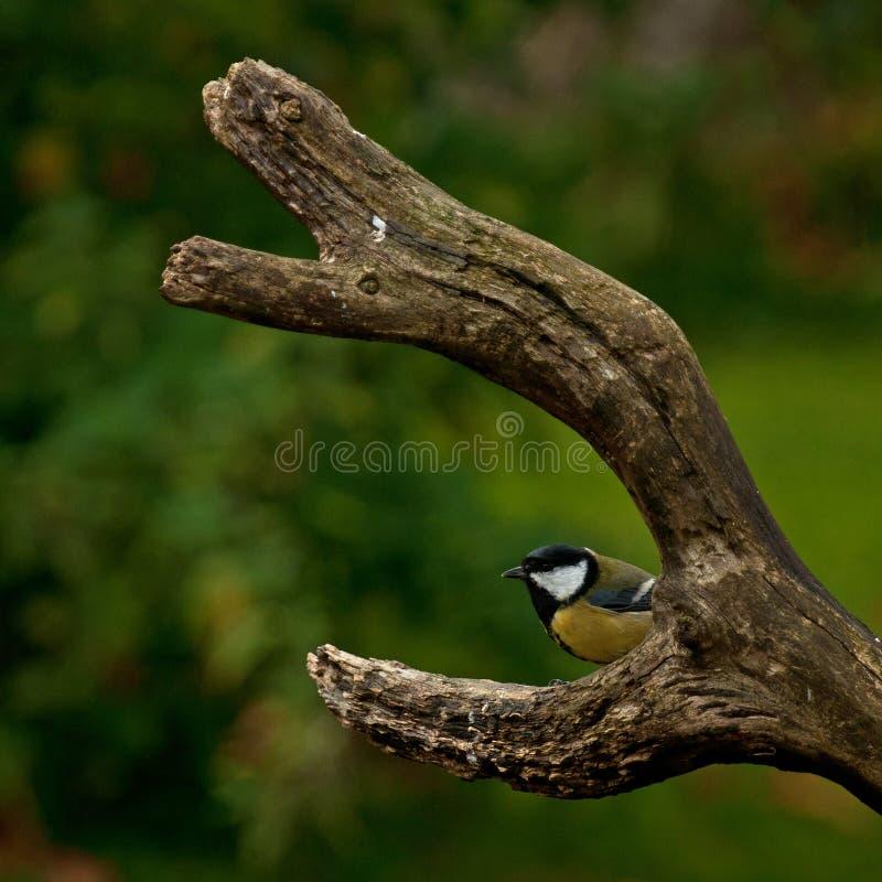 Migliori un uccello nella mano che due nel cespuglio fotografia stock