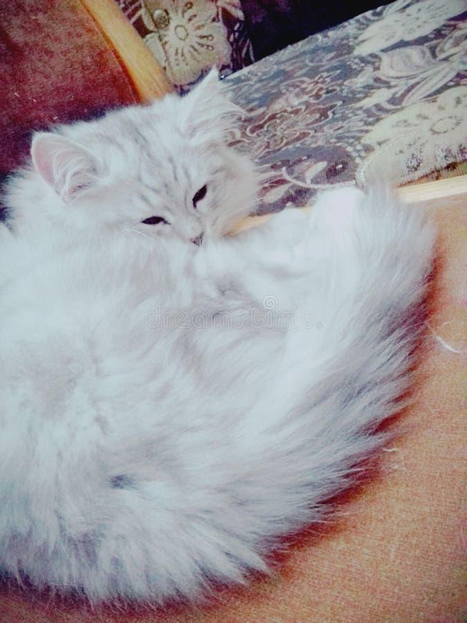 ½ mignon de 😠de chat photographie stock