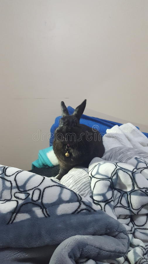 Mignon le lapin photos libres de droits