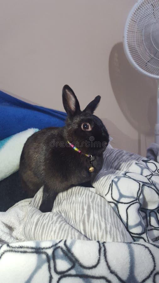 Mignon le lapin photo stock