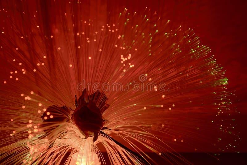 Migocący kwiaty zdjęcie royalty free