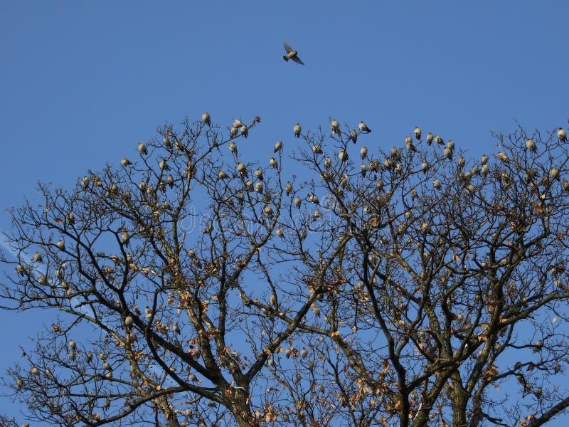 Migração dos pássaros imagem de stock