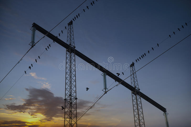 Migrating birds in electricty pylon stock photo