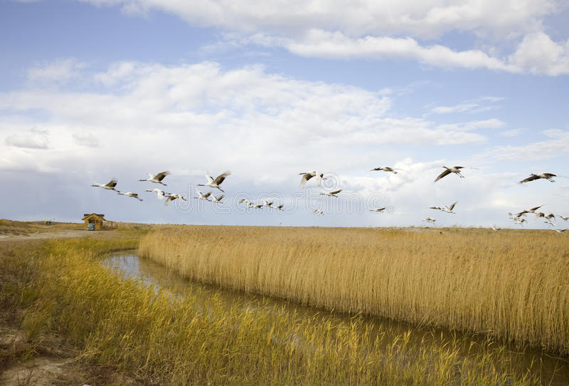 migrating för fågel royaltyfri bild