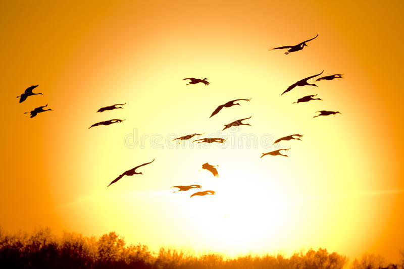 Migration Stock Photography