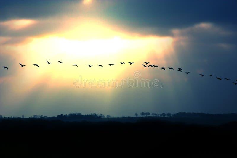Download Migration stock photo. Image of birds, november, beautiful - 2683566