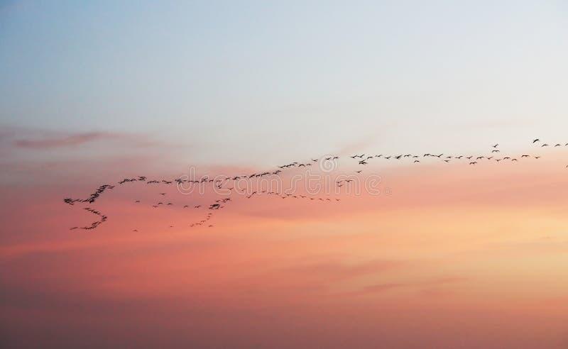 migration au coucher du soleil image stock