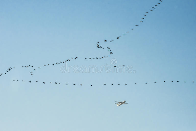 Migration Birds and plane royalty free stock photos
