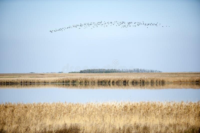 Migration. Photo of birds Migration in vojvodina royalty free stock photo