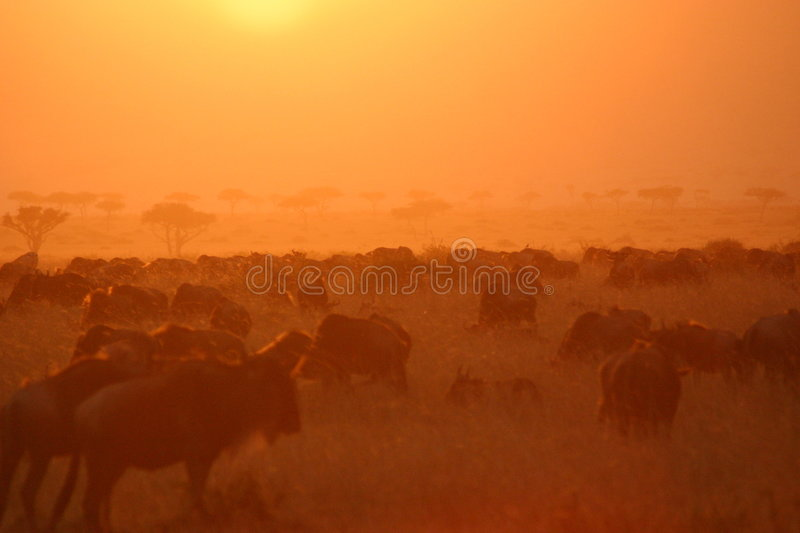Migration sunset 7,04 stock image