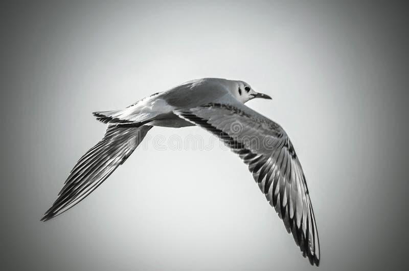 migratore fotografia stock