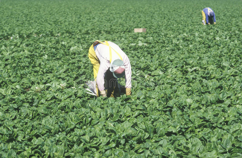 Migrerende arbeiders stock foto