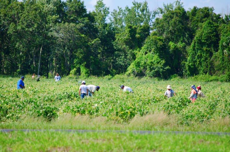 Migrerende landbouwbedrijfarbeiders op het gebied stock afbeeldingen