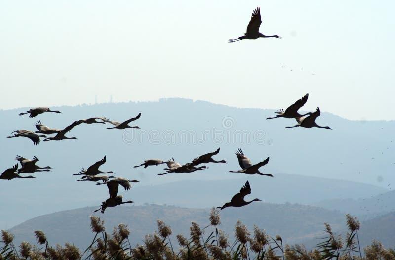 Migrerende vogels over meer bij de lente en de herfst stock afbeelding