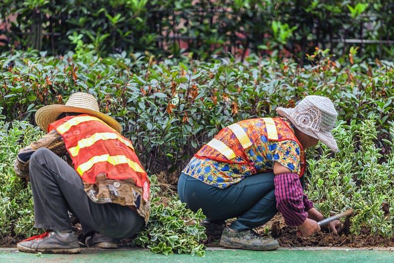 Migrerende werknemers het werken stock foto's
