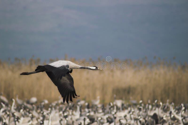 Migri degli uccelli fotografia stock libera da diritti