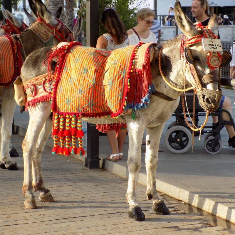 mijas-ezel taxi royalty-vrije stock afbeelding