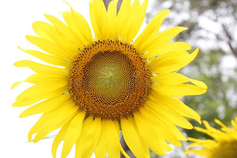 Mijn bloem stock afbeeldingen