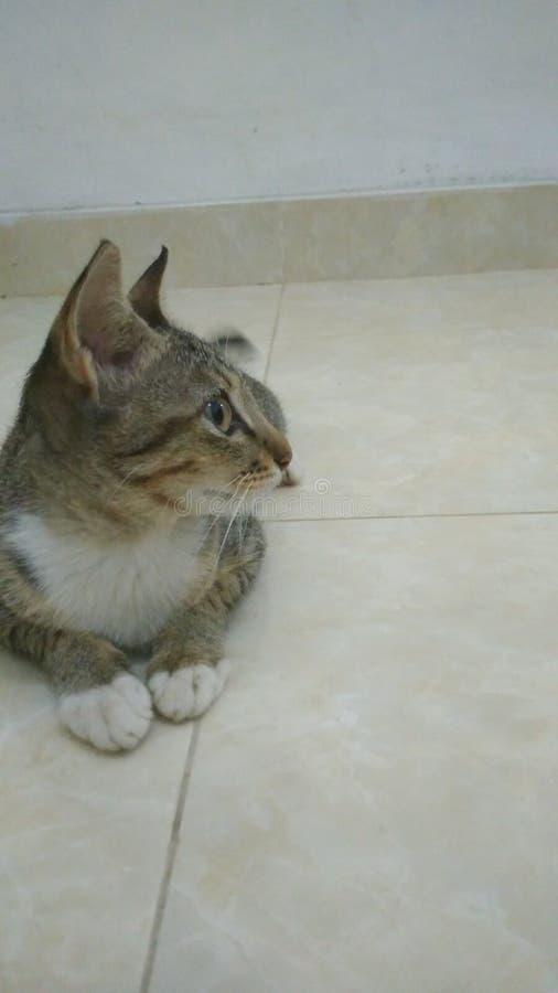 Mijn Cat Watching Someone stock afbeeldingen