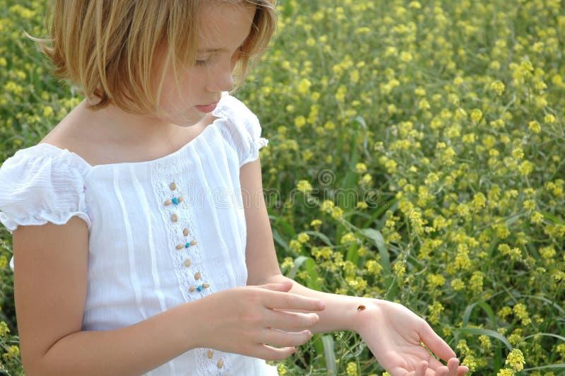 Mijn Dame Bug royalty-vrije stock foto's