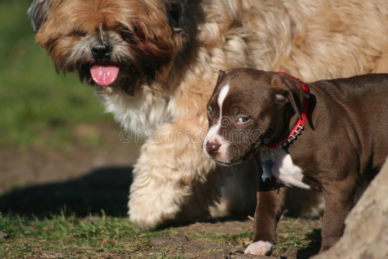 Mijn eerste dag bij het Park van de Hond stock afbeeldingen