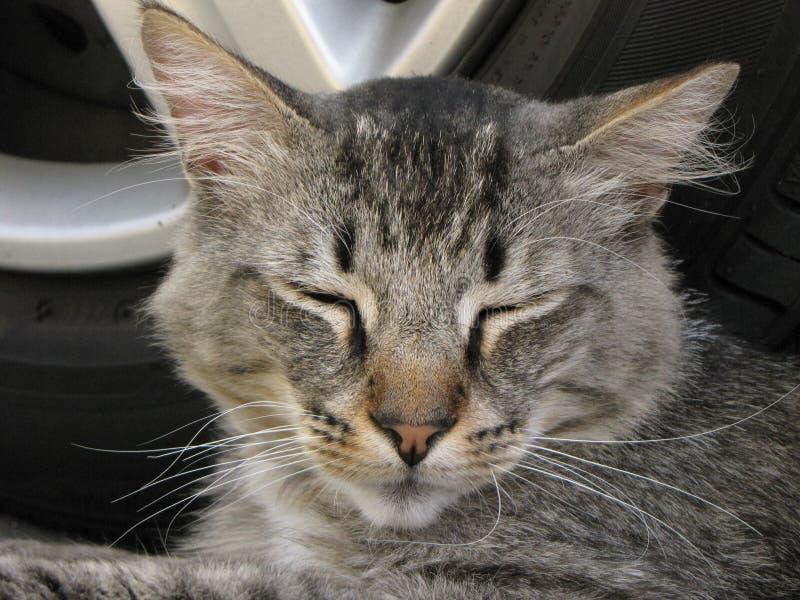 Mijn het houden van kat die somehere veel ferral kat, slimme kat kijken stock foto