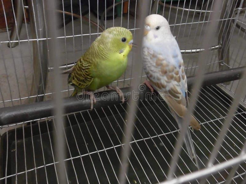 mijn het houden van vogel royalty-vrije stock fotografie