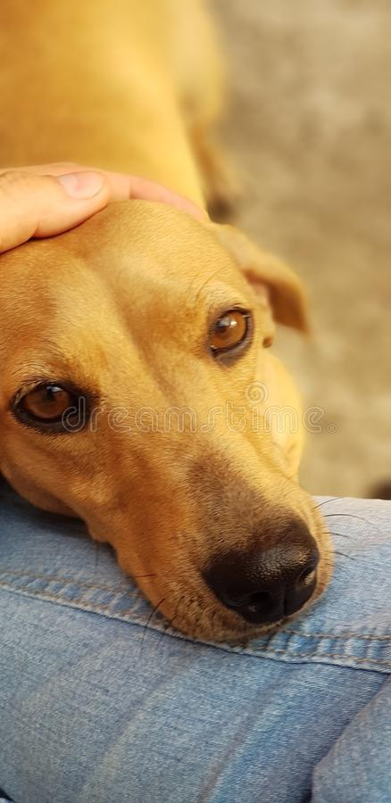Mijn hondtekkel, een kleine hond stock afbeelding