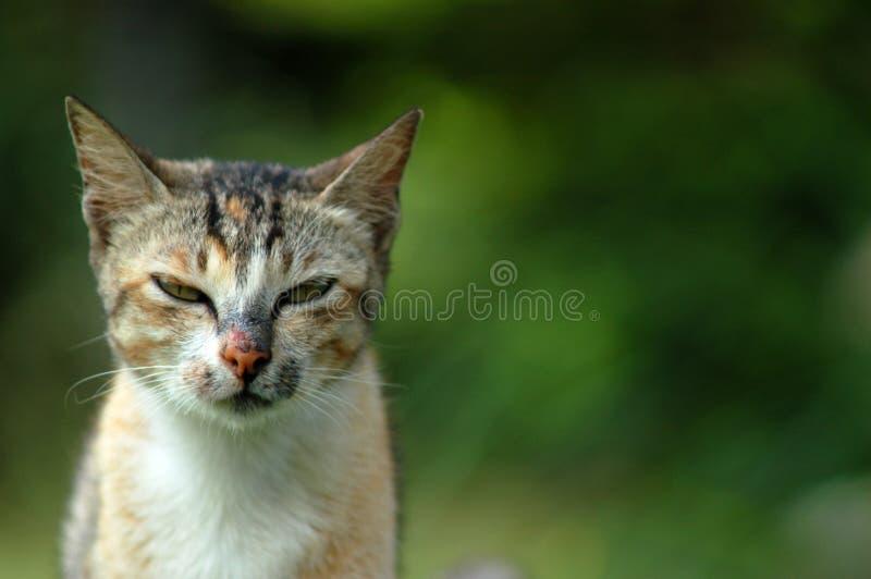 Mijn Kat stock foto