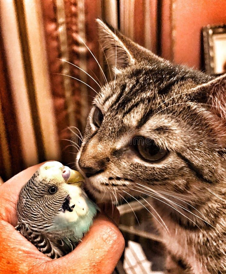 Mijn kat die mijn vogel kussen royalty-vrije stock fotografie