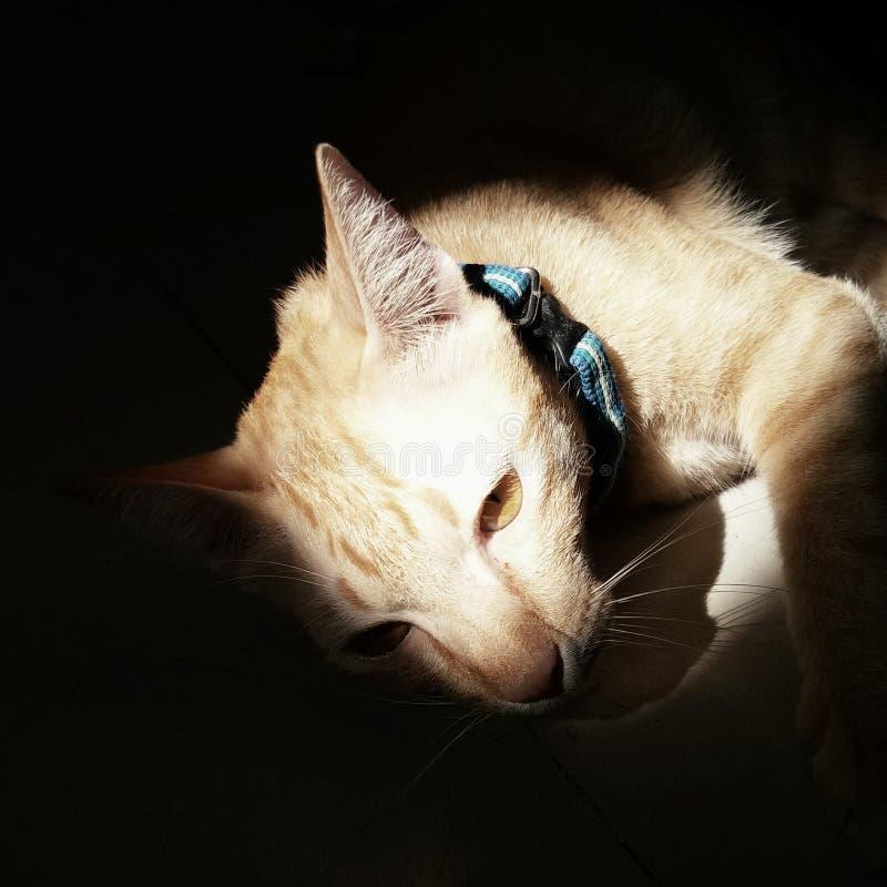 mijn kat met licht royalty-vrije stock afbeeldingen