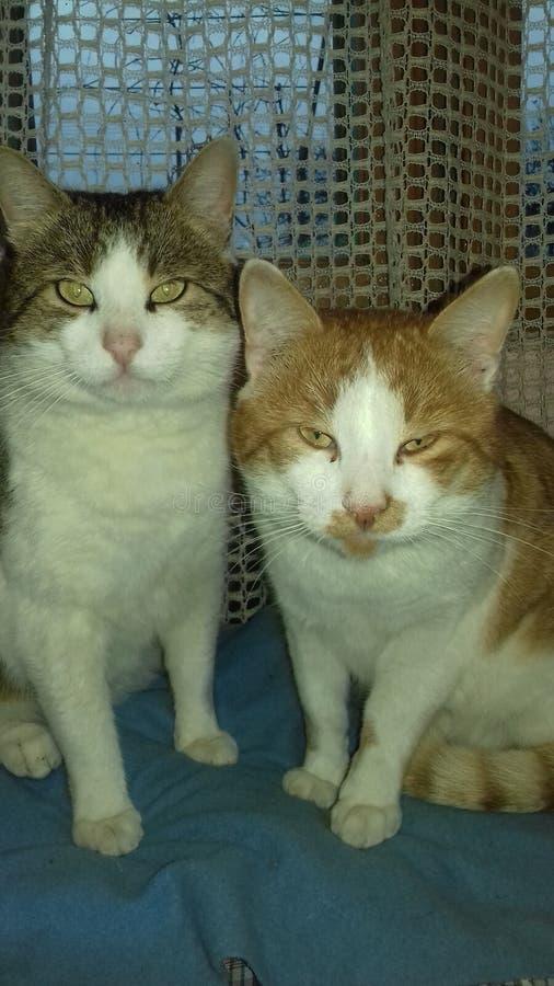 Mijn katten stock fotografie