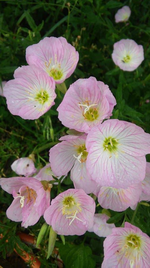 Mijn mamma'sbloemen royalty-vrije stock afbeelding