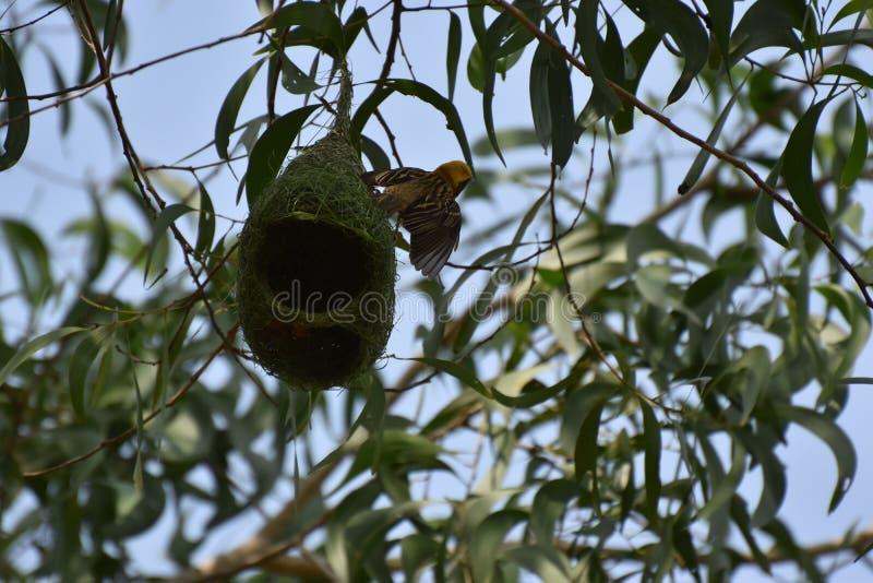 Mijn nest het is mijn huis stock fotografie