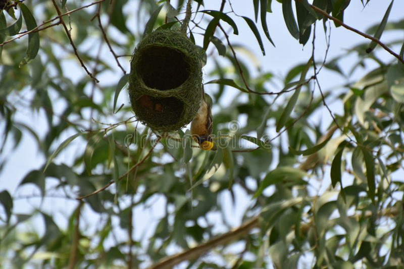 Mijn nest het is mijn huis stock afbeeldingen