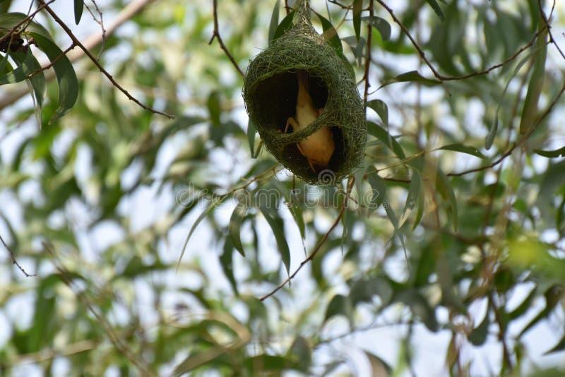 Mijn nest het is mijn huis stock foto