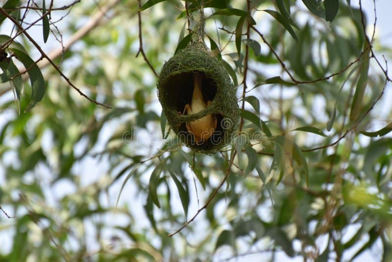 Mijn nest het is mijn huis stock foto's