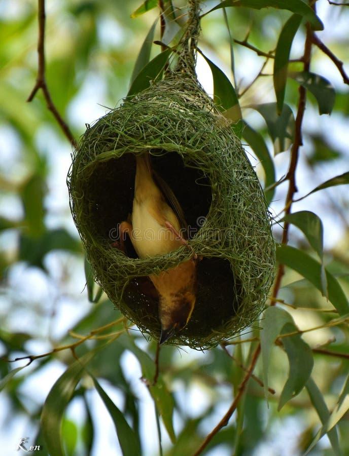 Mijn nest het is mijn huis royalty-vrije stock foto