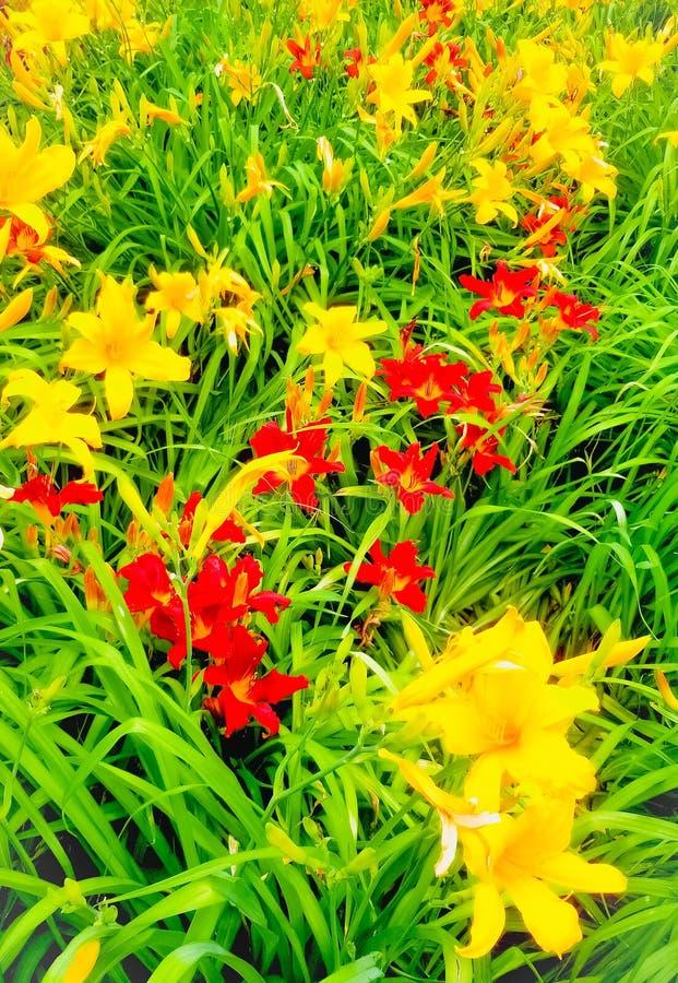Mijn tuin stock foto's