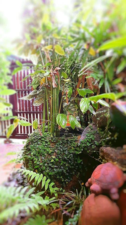Mijn tuin stock afbeeldingen