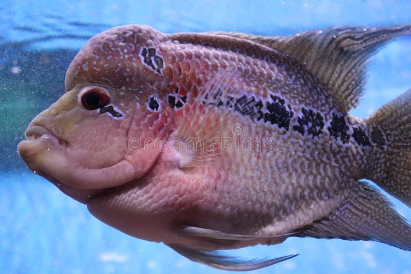 Mijn vissen royalty-vrije stock foto