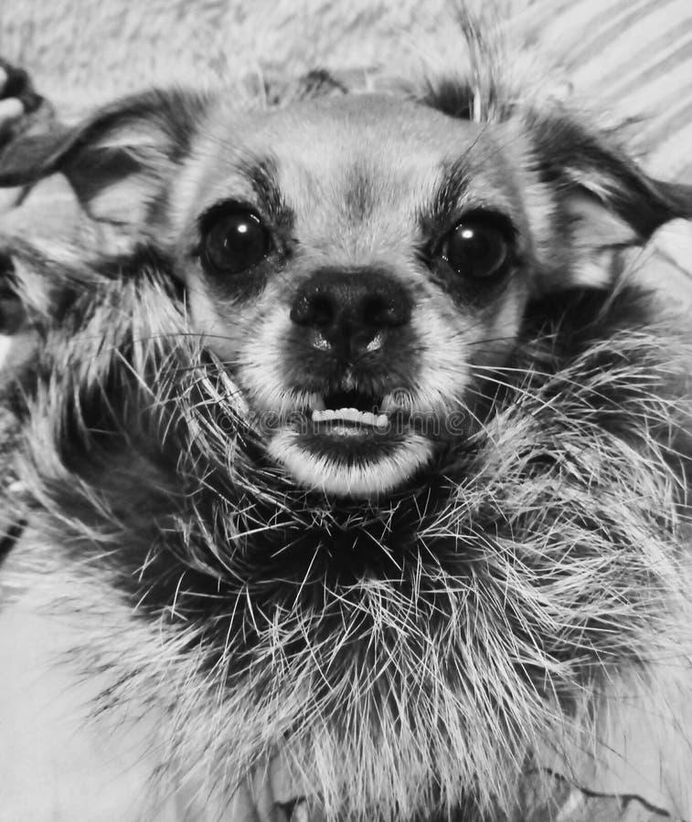 Mijn Zoete Hond royalty-vrije stock afbeeldingen