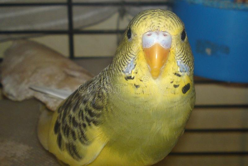 Mijn Zoete vogel royalty-vrije stock foto
